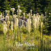 20  G Bear Grass