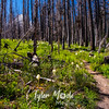 101  G Bear Grass Trail and Hood
