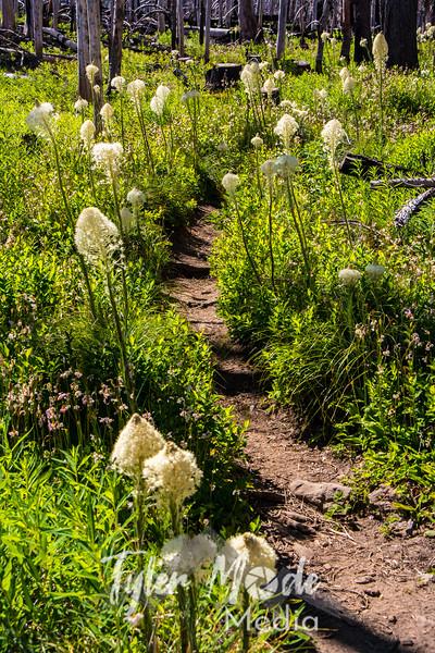108  G Bear Grass Trail V
