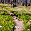 215  G Avalanche Lilies Trail