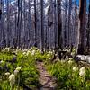 144  G Bear Grass Hood and Trail V