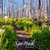 73  G Bear Grass Hood and Trail