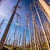 35  G Trees V