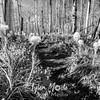 85  G Bear Grass Hood and Trail BW