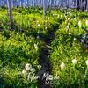 65  G Bear Grass and Trail