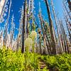 27  G Bear Grass and Trail V