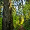 206  G Trail Sun Tree V