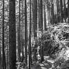 244  G Trail Sun BW V