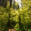 216  G Trail Sun Wide V