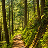 247  G Trail Sun V