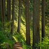233  G Trail Down Trees V