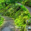51  G Trail Green