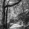 39  G Trail Sun BW V