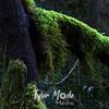 65  G Mossy Tree Wider