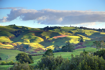 Late afternoon just outside of Cambridge, New Zealand