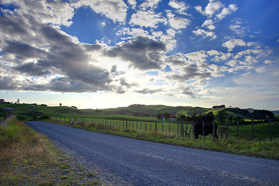 A gravel road between farms near Cambridge, New Zraland
