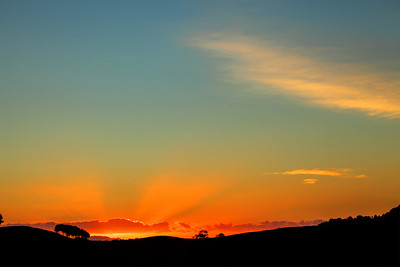 The last rays of sun during sunset with trees on the horizon.  Near Cambridge, Waikato, New Zealand.