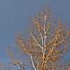 DJRI_copyright_2012-01-12@16-24-44