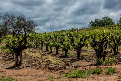 OGP Vineyard