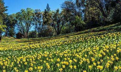 Fields of Spring