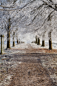 Frosty Trees at Packwood House