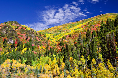 Fall colors splash across the slopes in Big Cottonwood Canyon