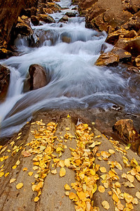 was25:  Fallen cottonwood leaves line Big Cottonwood Creek
