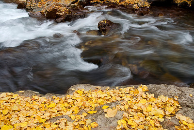 was27:  Fallen cottonwood leaves line Big Cottonwood Creek