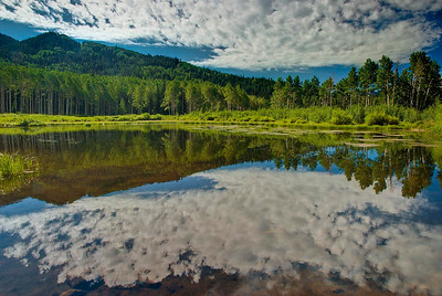 Sky, clouds and summer foliage reflect in Willow Lake, Big Cottonwood Canyon.