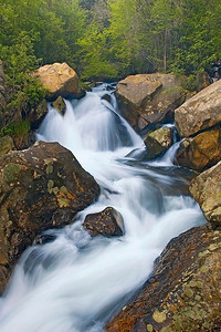 Early spring foliage and rushing water in Big Cottonwood Canyon