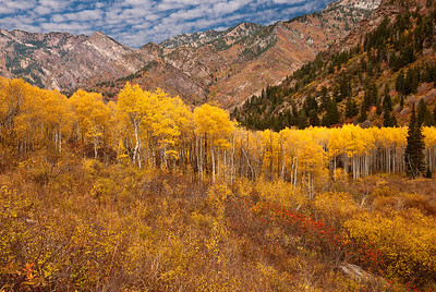 Fall colors in the Mineral Fork area of Big Cottonwood Canyon