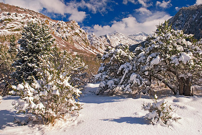 Fresh snow in Bell's Canyon