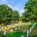 Arlington-Cemetery-Trees-Gravestones-Memorial-Day_trees-oaks-peaceful-tranquil-honor-duty-service-D8X6080