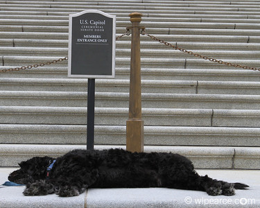 Memo on the Senate steps... getting about as much work done as they do.