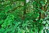 Washington, North Cascade National Park, Rainforest, Landscape, HDR, 华盛顿州,  北瀑布国家公园, 雨林, 高动态范围拍摄, 风景