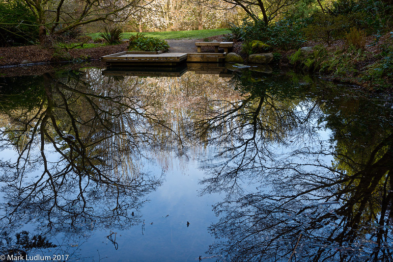 Maple Garden Reflection Pond 04-2017