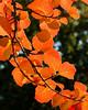 Arboratum Red Filters