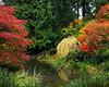 Arboratum Pond