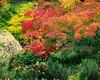 Arboratum Maple Burst