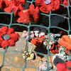 Knitted poppies on Fatfield Bridge