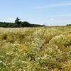 Penshaw field