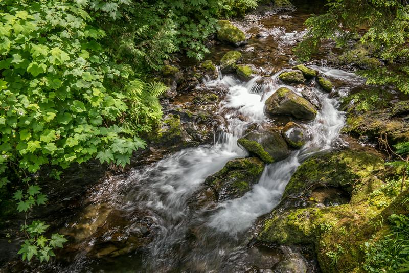Lake Quinault hike