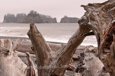 Rialto Beach driftwood.