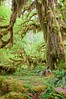 Hoh Rainforest.