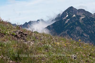 Wildflowers along the Hurricane Ridge Trail.