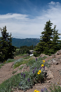 Wildflowers along the Hurricane Ridge Trail.