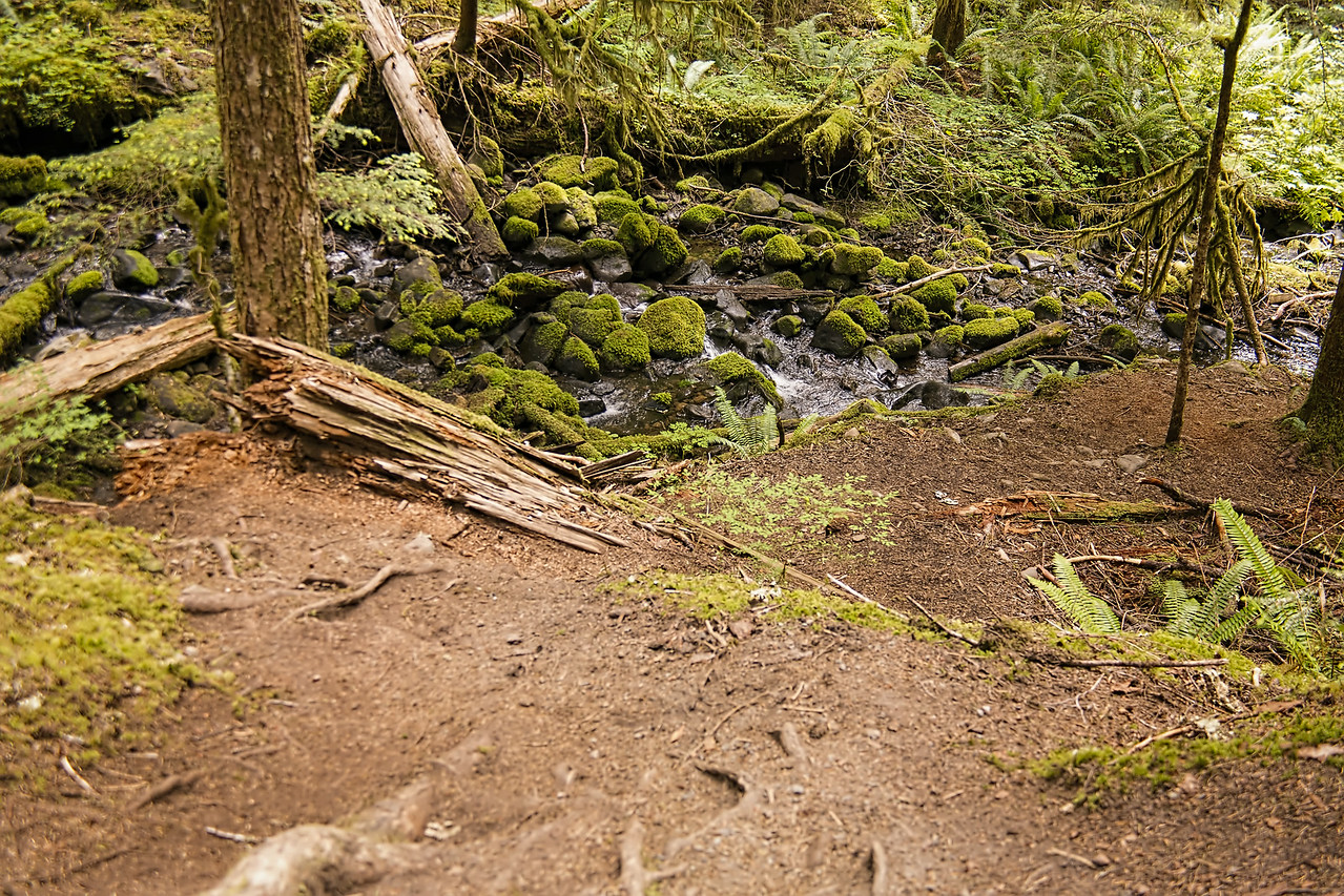 Sol Duc Trail
