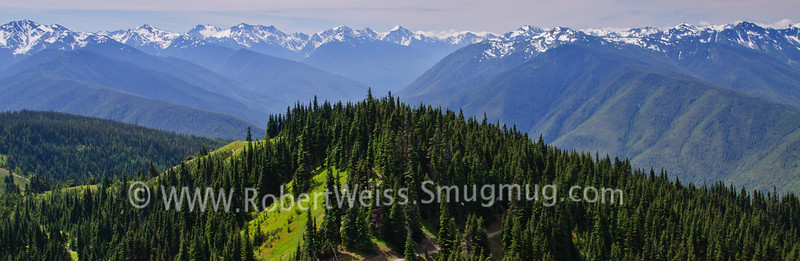 Panoramic vista along the Hurricane Ridge Trail.