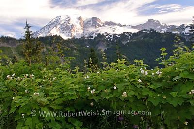 Wildflowers in Mount Rainer National Park.