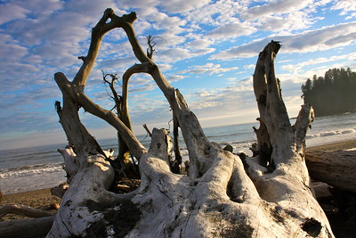 La Push, Washington Driftwood